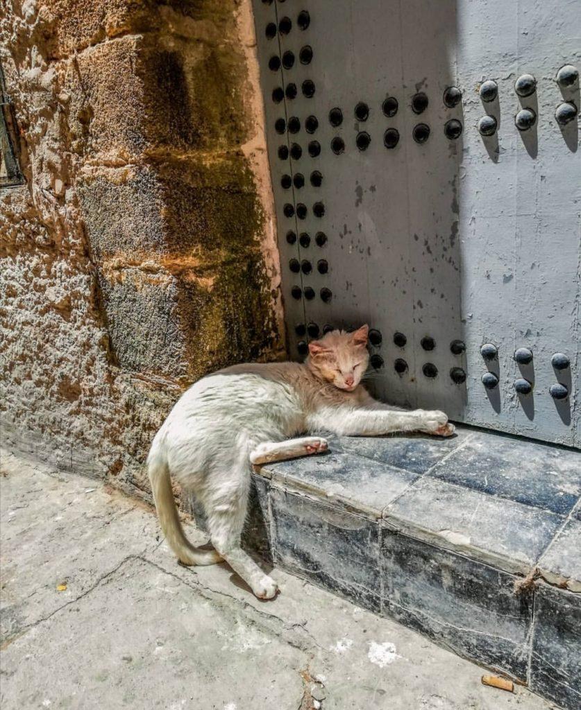 Cosa fare a Essaouira. Un gatto dorme al sole in Medina a Essaouira