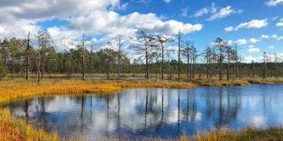 Autunno al Lahemaa Rahvuspark