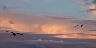 Due gabbiani volano alti nel cielo durante il tramonto a Saint-Malo