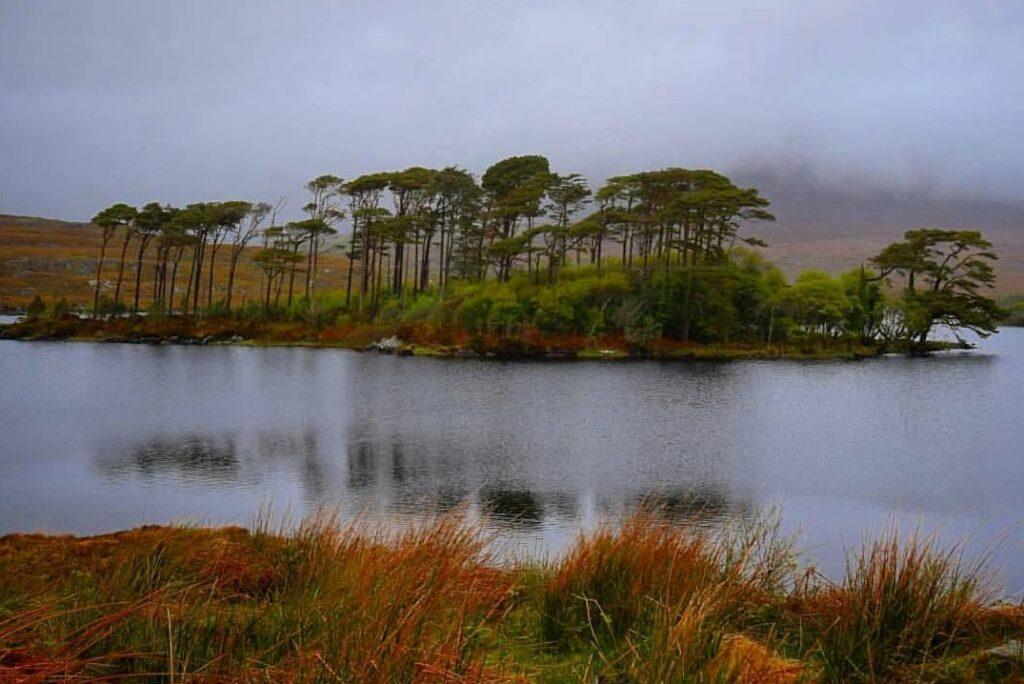 Pine Island vicino al Connemara National Park in Irlanda.