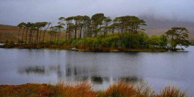 L'isola dei pini è un immagine iconica dell'Irlanda e si trova nelle vicinanze del parco del Connemara.